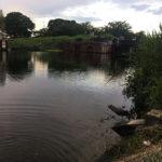 横利根川でブラックバス釣り2019!!ついに釣れた!!と思ったら…